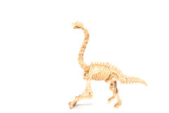 Dinosaur toy Skeleton Stock Photography