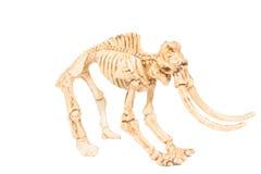 Dinosaur toy Skeleton Stock Image