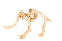 Dinosaur toy Skeleton Stock Photo