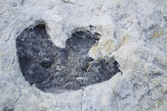 Dinosaur Track Stock Images