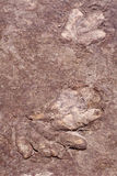 Dinosaur Tracks Stock Photos