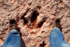 Dinosaur tracks Royalty Free Stock Photography