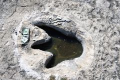 Dinosaur Tracks in Texas. Stock Photography