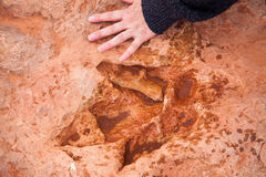 Dinosaur tracks usa Royalty Free Stock Photo