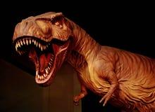 Dinosaur. Trex in Sirindhorn Museum Royalty Free Stock Image
