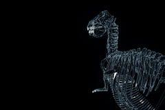 Dinosaur TRex Skeleton in Hologram Wireframe Style. Nice 3D Rendering Stock Photo