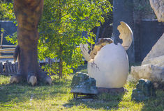Dinosaur - Triceratops cub in egg. Dinosaur - Triceratops. Automated figures in Dinopark, Krasnodar, Russia Royalty Free Stock Photo