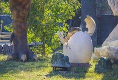 Dinosaur - Triceratops lisiątko w jajku Zdjęcie Royalty Free