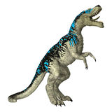 Dinosaur Tyrannosaurus Royalty Free Stock Photo