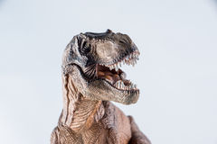 Dinosaur. Tyrannosaurus rex dinosaur head showing teeth royalty free stock image
