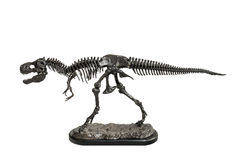 Dinosaur Tyrannosaurus-Rex skeleton metal model Royalty Free Stock Images