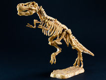 Dinosaur Tyrannosaurus T Rex skeleton on black background Stock Image