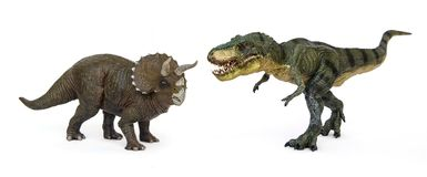 Dinosaur Tyrannosaurus and Triceratops. Battle of dinosaurs of Cretaceous. Shooting Hunt and Roaring of TyrannosaurusT-rex With threat and self defense of Stock Photos