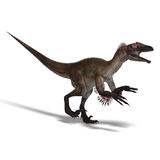 Dinosaur Utahraptor. 3D render with clipping path and shadow over white Royalty Free Stock Images