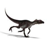 Dinosaur Utahraptor Royalty Free Stock Image