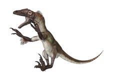 Dinosaur Utahraptor Stock Photo