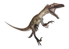 Dinosaur Utahraptor Stock Photos