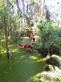 Dinosaur world swamp picture. Dinosaurs on the prowl Stock Image