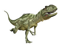 Dinosaur Yangchuanosaurus Royalty Free Stock Photo