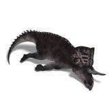 Dinosaur Zuniceratops Stock Images