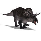 Dinosaur Zuniceratops Stock Photography