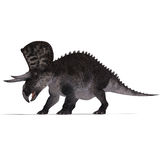 Dinosaur Zuniceratops Stock Photo