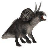 Dinosaur Zuniceratops Royalty Free Stock Image