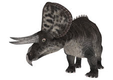 Dinosaur Zuniceratops Royalty Free Stock Photos