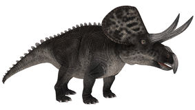 Dinosaur Zuniceratops Stock Photos