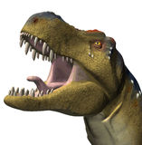 dinosaura rex t Obraz Stock