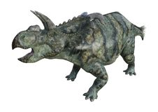 dinosaure Albertaceratops du rendu 3D sur le blanc Image libre de droits