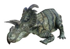 dinosaure Albertaceratops du rendu 3D sur le blanc Images libres de droits