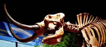 Dinosaure au musée de création image libre de droits