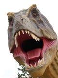 Dinosaure de Tiranosaurus Images libres de droits