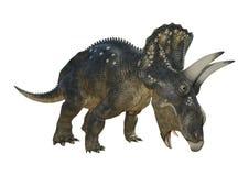 dinosaure Diceratops du rendu 3D sur le blanc Image libre de droits