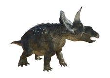dinosaure Diceratops du rendu 3D sur le blanc Images stock