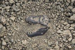 Dinosaure fossile Photos libres de droits