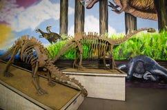 Dinosaure squelettique modèle grandeur nature au dinotopia Siam Park City image libre de droits