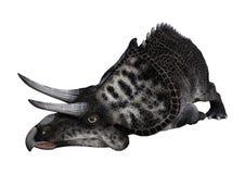dinosaure Zuniceratops du rendu 3D sur le blanc Images stock