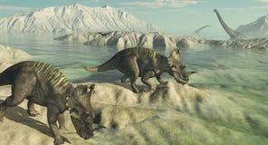 Dinosauri del Centrosaurus che esplorano paesaggio Fotografia Stock