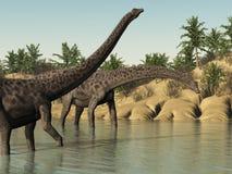 Dinosauri del Diplodocus Immagini Stock
