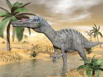 Dinosauri di Suchomimus in deserto - 3D rendono illustrazione di stock