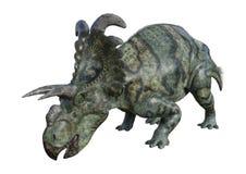 dinosaurie Albertaceratops för tolkning 3D på vit Royaltyfria Bilder