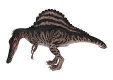 dinosaurie Spinosaurus för tolkning 3D på vit Royaltyfria Foton