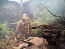 Dinosaurie TRex royaltyfria bilder