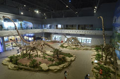 Dinosauriefossil Arkivfoton