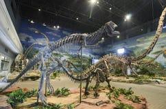 Dinosauriefossil Arkivfoto