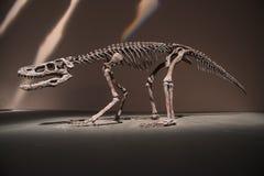 Dinosauriefossil Fotografering för Bildbyråer