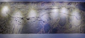 Dinosauriefossil royaltyfria bilder