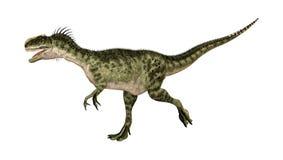 dinosaurieMonolophosaurus för tolkning 3D på vit Royaltyfri Bild